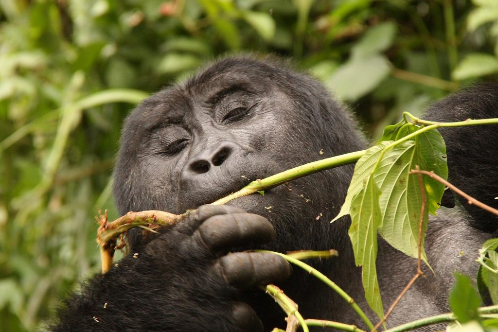5 Day Gorilla Tracking and Wildlife Safari