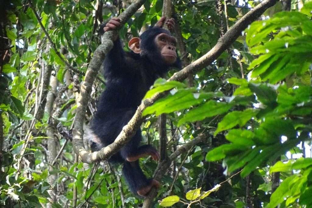 7 Day Gorilla Trekking Safari - Rwanda