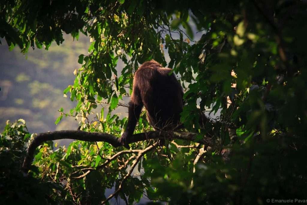 Nyungwe Chimpanzee Tracking Safari Rwanda