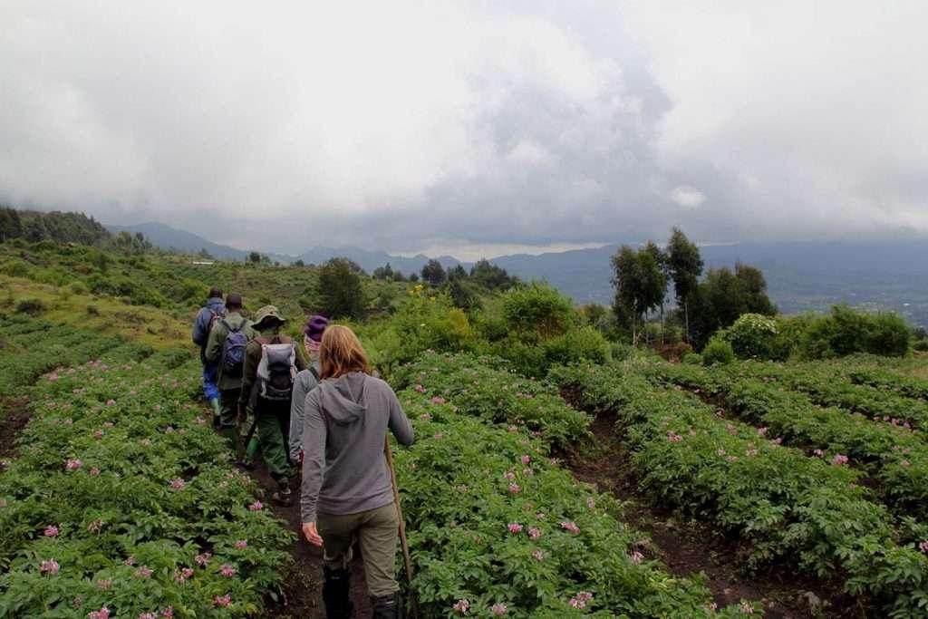 6 Day Gorilla and Chimpanzee Tour - Rwanda