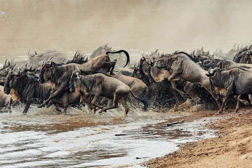 Kenya's Masai Mara Wildlife & Migration Safari