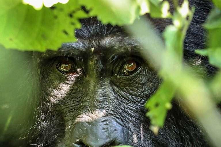 Best of Uganda & Tanzania Safari