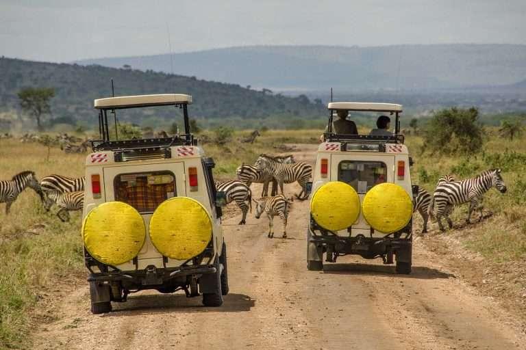 Gorillas and Serengeti Migration Safari